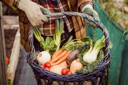 Photo d'un panier de légumes d'un exploitant agricole
