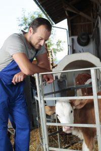 Photo exploitant agricole et son veau